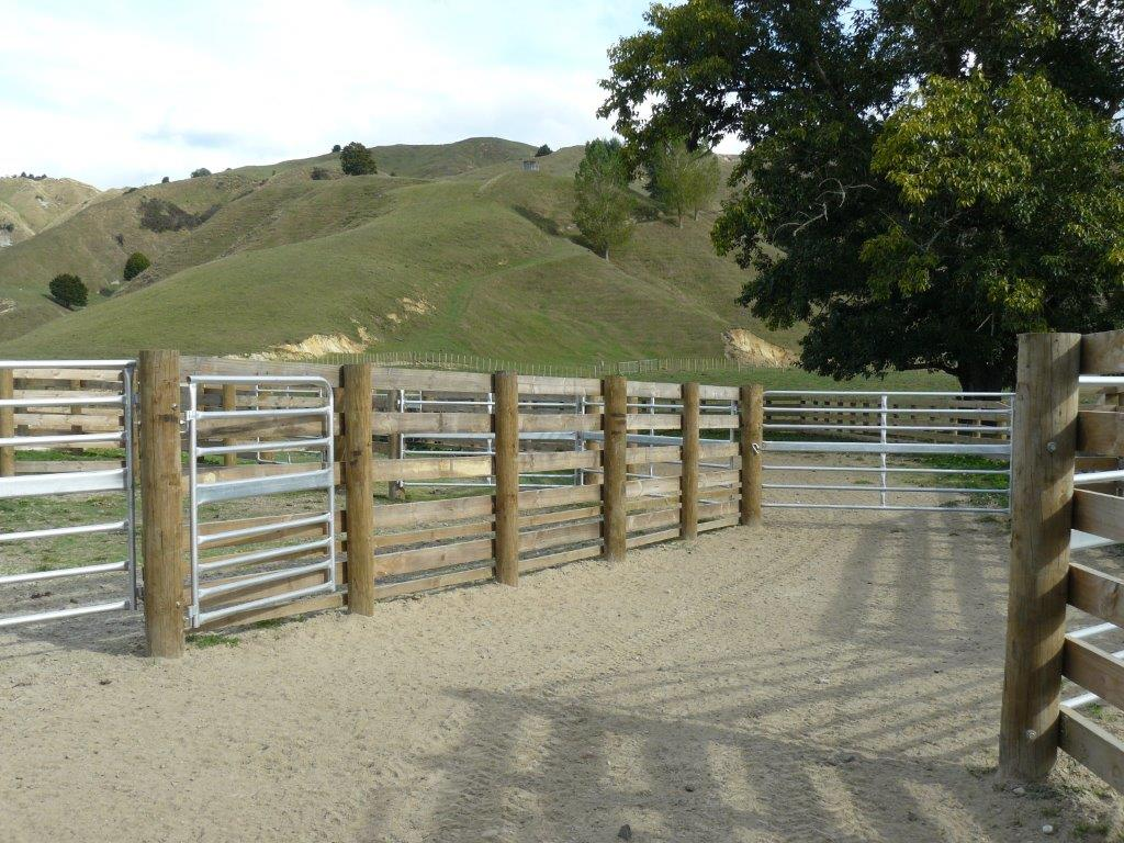 Large Cattle Yard Designs: Farm Sheds, Buildings, Barns, Cattle
