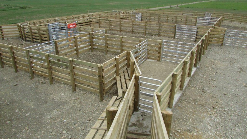 Farm Sheds, Buildings, Barns, Cattle, Sheep Yards
