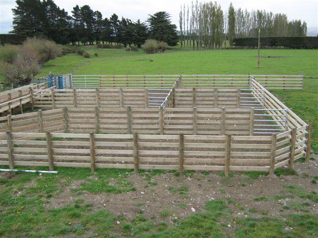Farm Sheds, Buildings, Barns, Cattle, Sheep