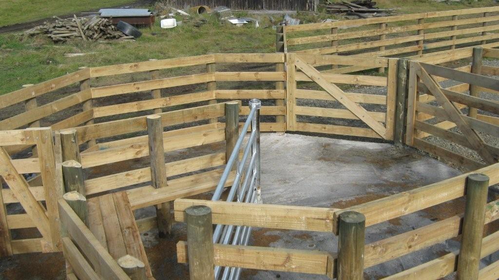 Farm Sheds, Buildings, Barns, Cattle