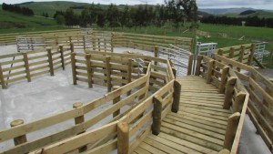 Yards Farm Sheds Buildings Barns Cattle Sheep Yards Bridges